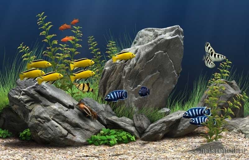 Для каждого вида подходит определенный температурный режим в аквариуме.