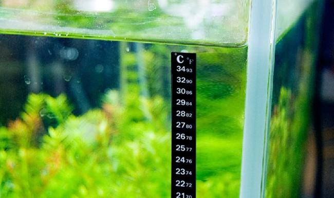 Градусник, показывающий температуру воды, должен быть размещен на видном месте