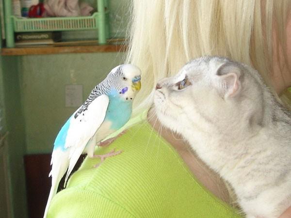 Попугайчик и кошка