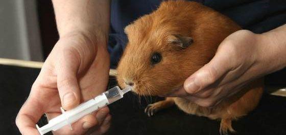 Лечение должен назначить ветеринар