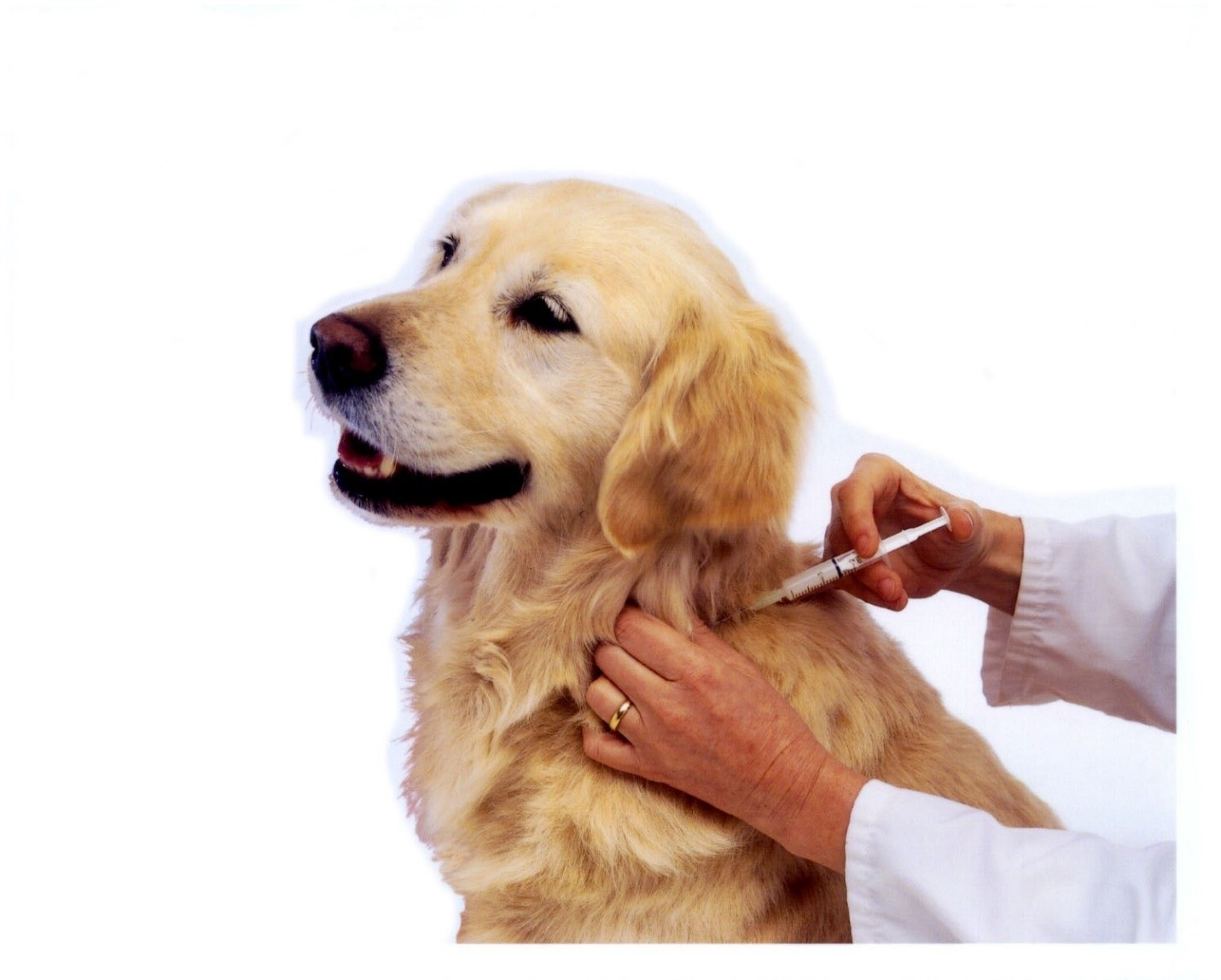 Вакцинация спасает собак от гибели при чуме