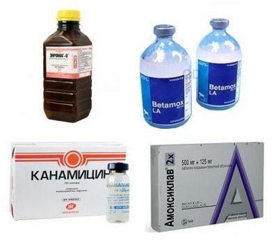 Антибактериальные препараты для лечения гнойных ран