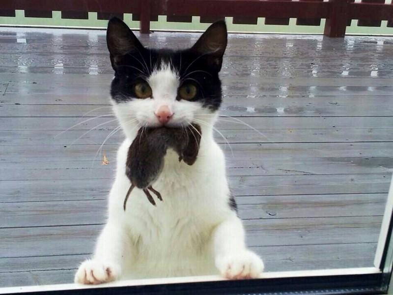Мыши — источник витаминов