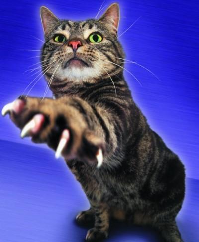 Заражение происходит при укусах кошки, царапинах