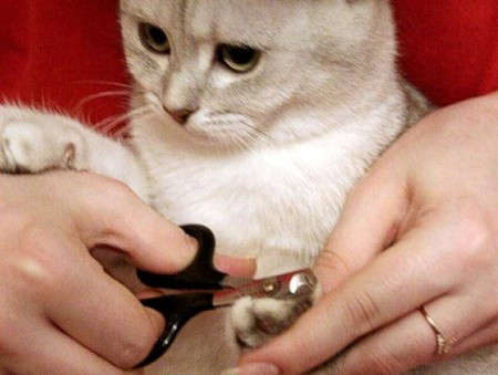 Стрижка когтей котику