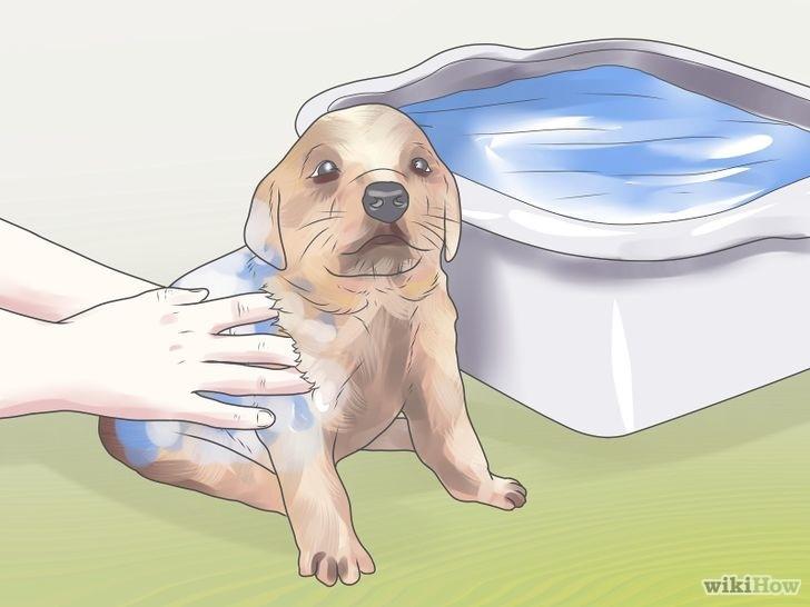Купание щенка противоблошным шампунем