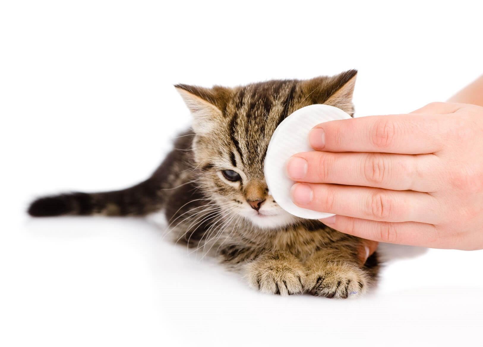 Лечим хламидиоз у котёнка