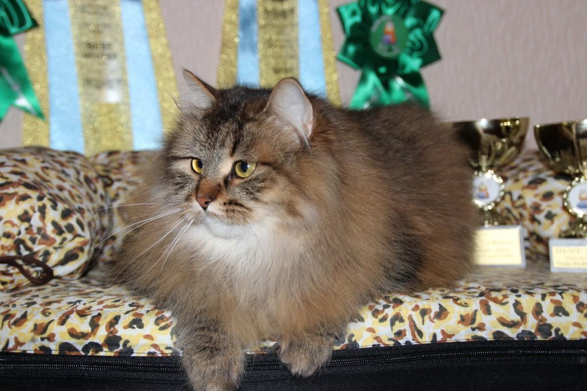 Кастрированные кошки мастопатией не заболевают