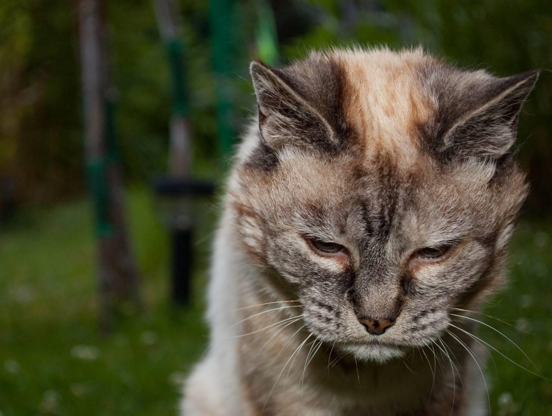 Кота тошнит