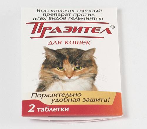Празител в таблетках для кошек – антигельминтик широкого спектра действия