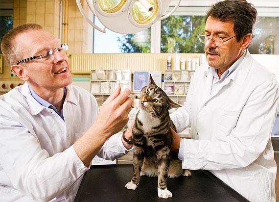 Противовирусные средства кошкам должен назначать ветеринарный специалист
