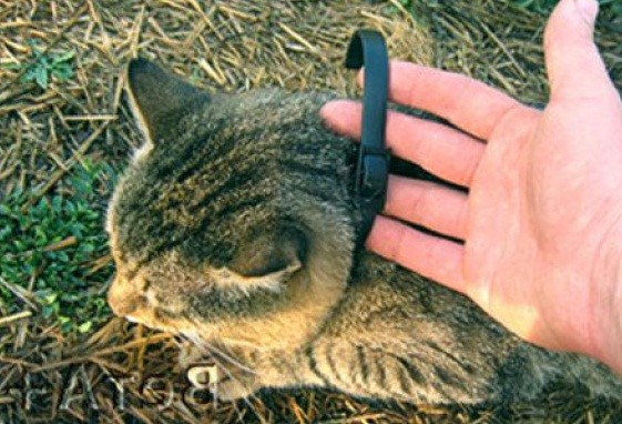 Противоблошиный ошейник – отличное профилактическое средство от эктопаразитов для котов
