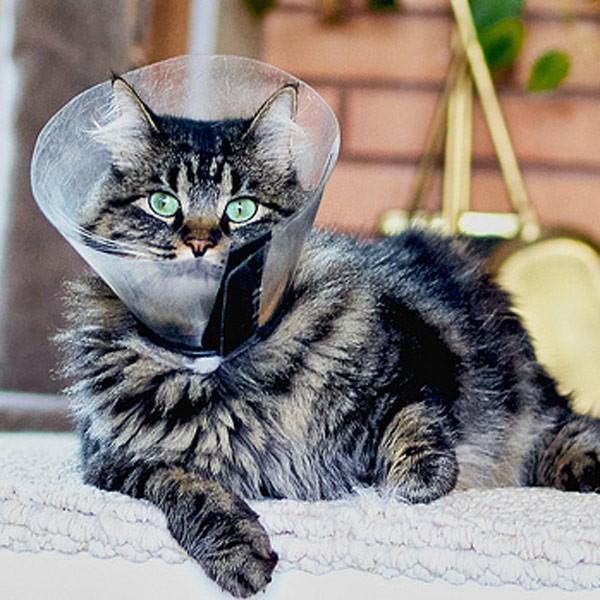 Защитный воротник на кошке