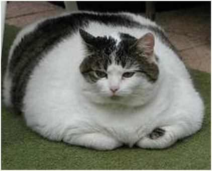 Кот с диабетом