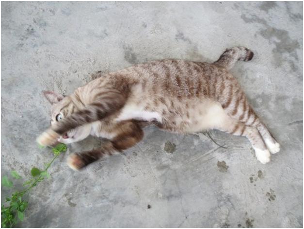 Диагностика эпилепсии у кошек