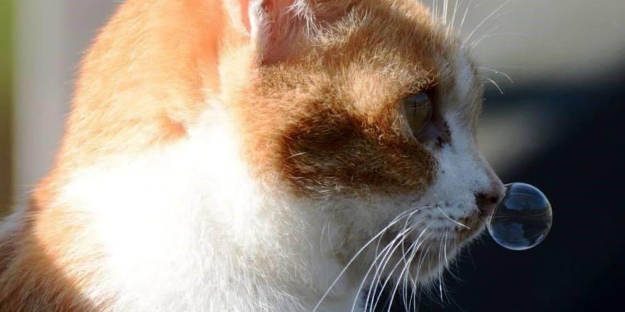 Ринит у кошки