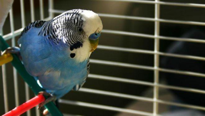 Понос у попугайчика