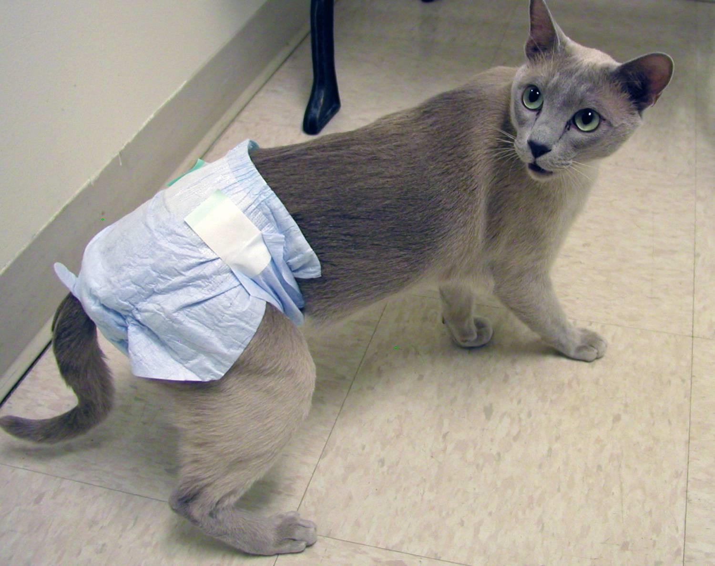 Кот в памперсе