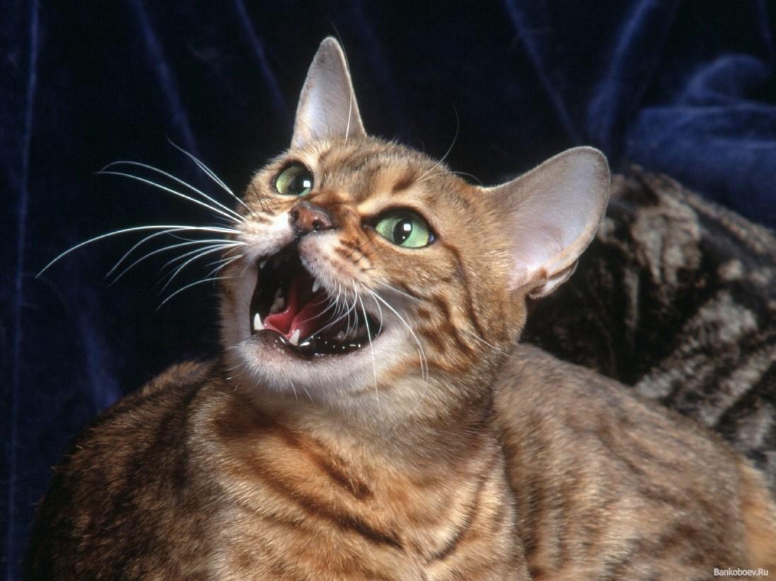 Контрасекс котенок