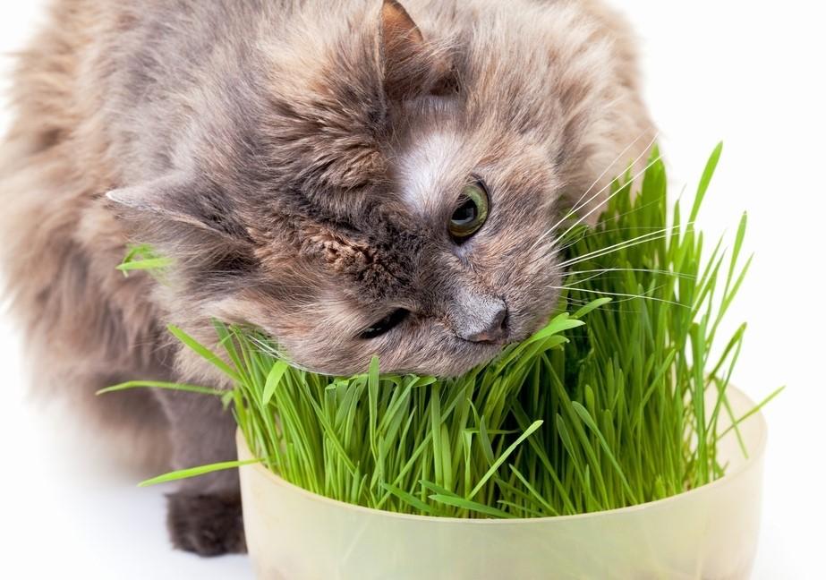 Кошка спасается от авитаминоза