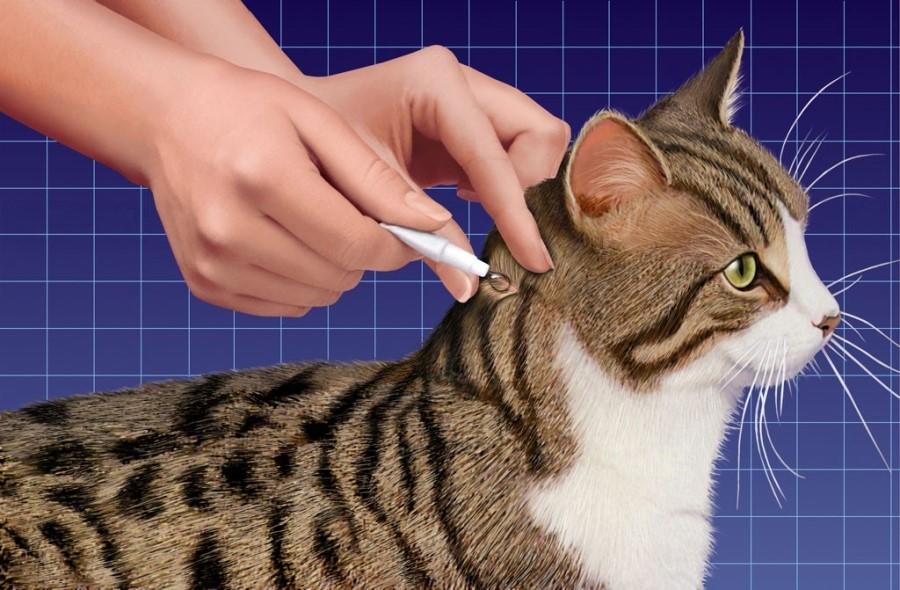 Нанесение кошке капель от глистов