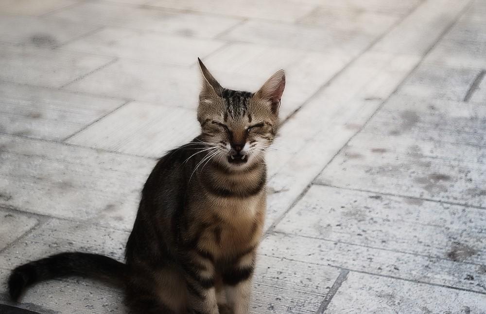 Кот кашляет