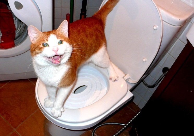 Коша хочет в туалет