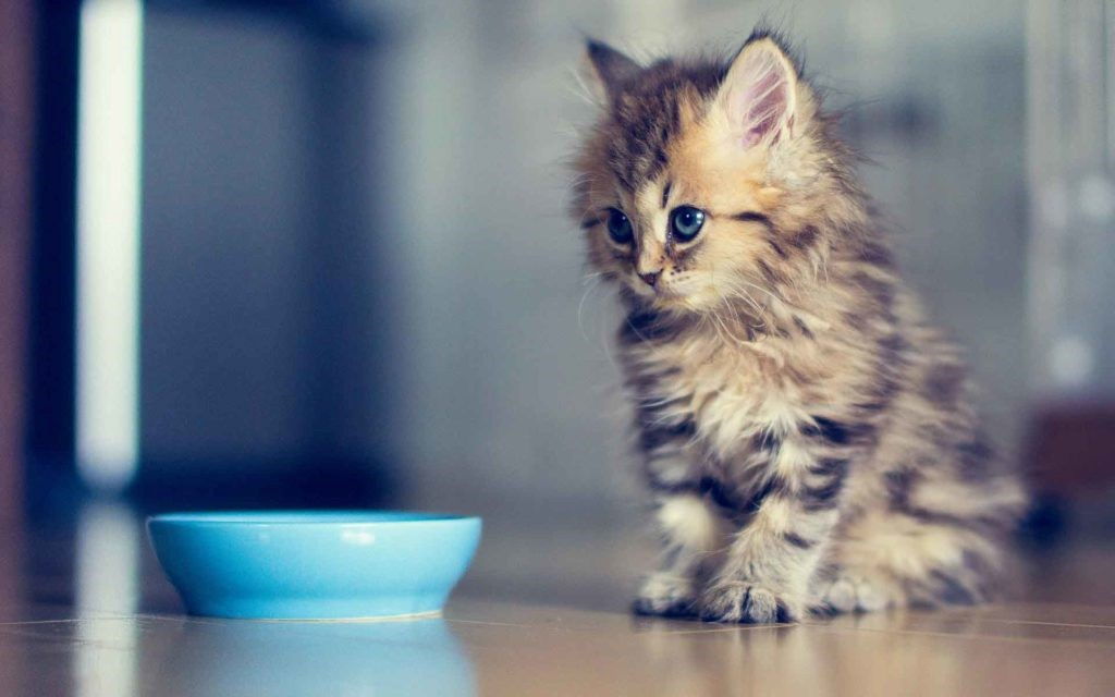 Котенка тошнит