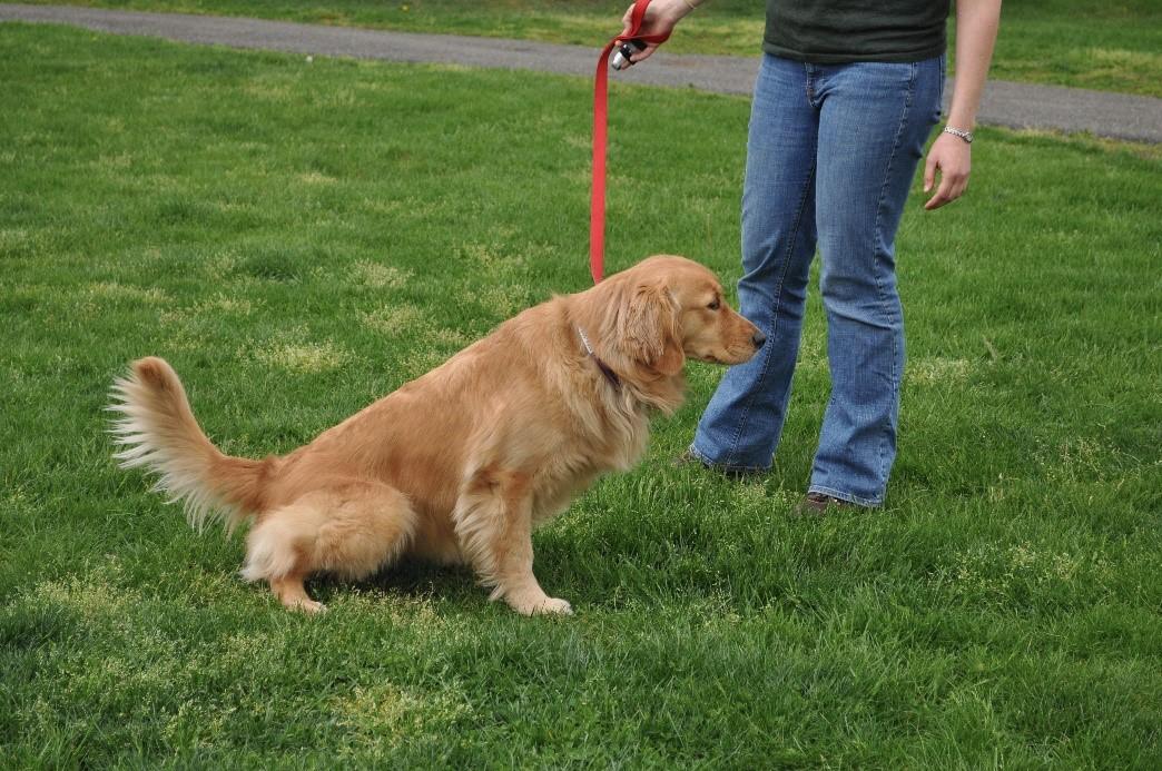 Собака опорожняется