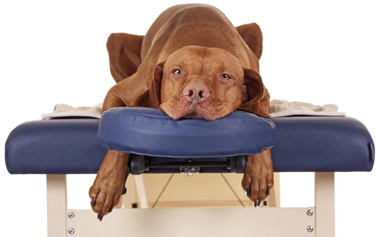 Собака под действием обезболивающего