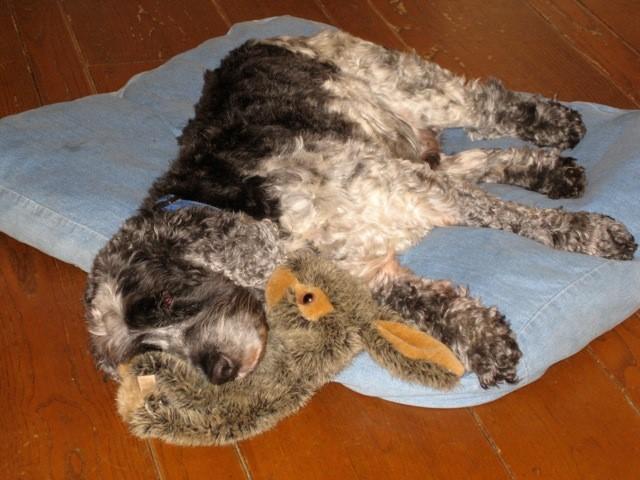 Симптомы панкреатита у собаки