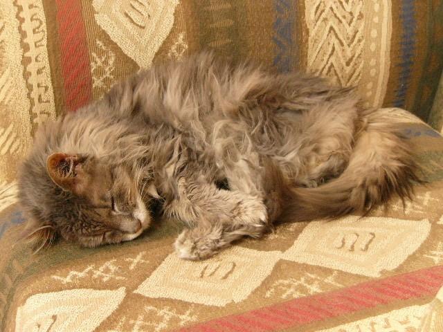 Кошка, страдающая почечсной недостаточностью