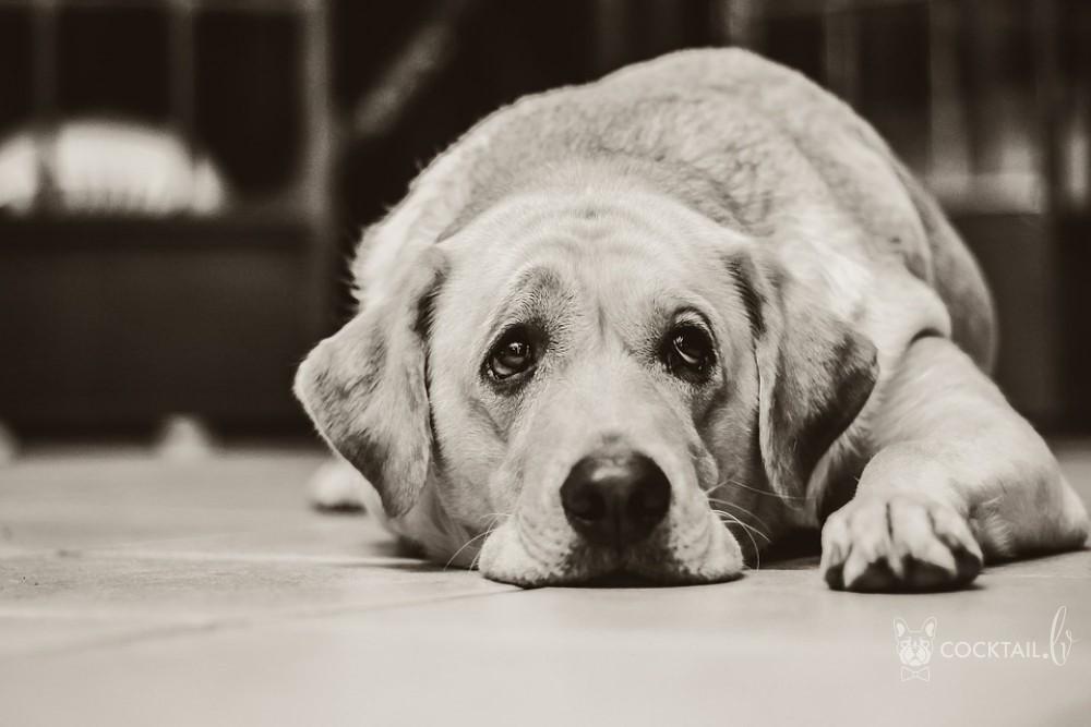 Собака больна