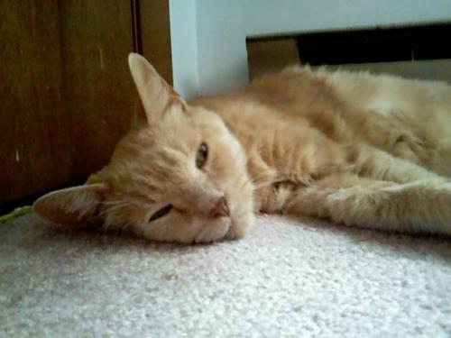Болезненный вид кошки