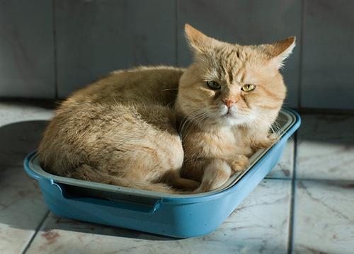 Кошка с апатией