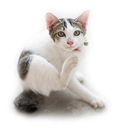 Кошка с чесоткой