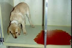 Понос с кровью у собаки