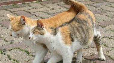 Гуляющие кошки