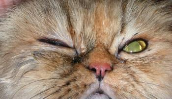 Кот прищурил глаз