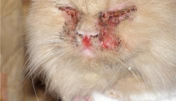 Кошачий грипп у кота