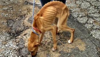 Собака, больная туберкулезом