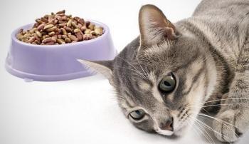 Кошка не ест из-за воспаления