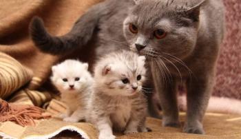 Кошка-первородка с потомством