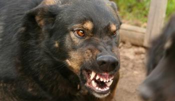 Собака, больная бешенством