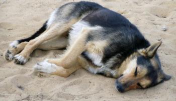 Эпилептический припадок у собаки