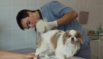 Осмотр параанальных желез собаки