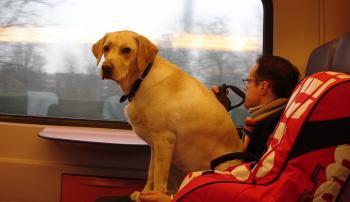 Перевозка четвероногих пассажиров