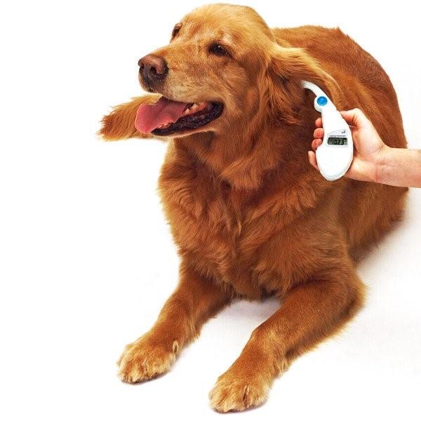 Измерение у собаки температуры и пульса